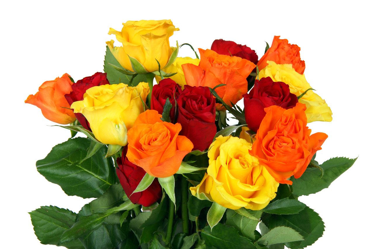 Заказать цветы оптом